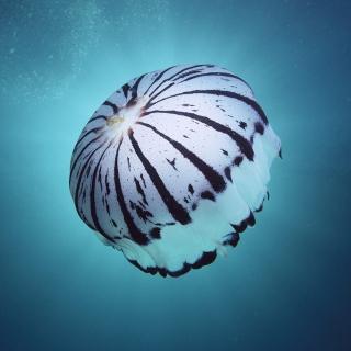 Purple Jellyfish - Obrázkek zdarma pro iPad 2