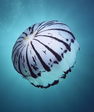 Purple Jellyfish - Obrázkek zdarma pro 640x1136