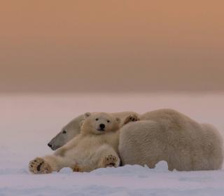 White Bears Family - Obrázkek zdarma pro 320x320