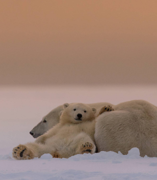White Bears Family - Obrázkek zdarma pro iPhone 5C