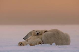 White Bears Family - Obrázkek zdarma pro Android 540x960