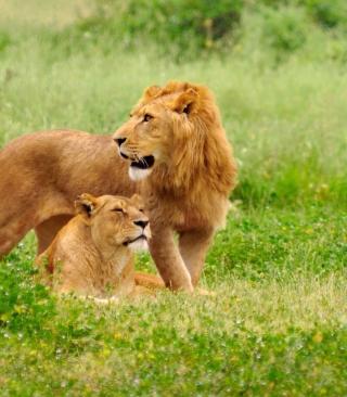 Lion And Lioness - Obrázkek zdarma pro 240x432