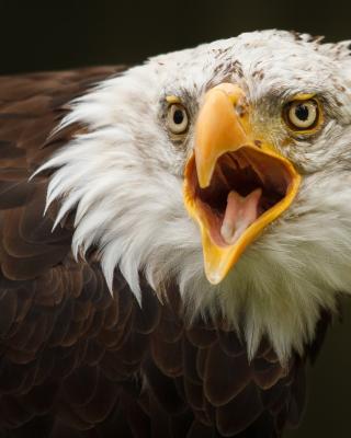 Eagle - Obrázkek zdarma pro 240x320