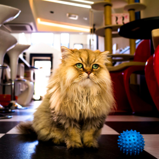 Shaggy Cat - Obrázkek zdarma pro iPad 2