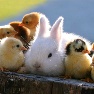 Rabbit and Chicken - Obrázkek zdarma pro 1024x1024