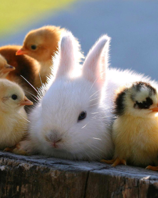 Rabbit and Chicken - Obrázkek zdarma pro 640x960