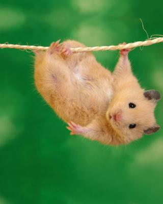 Funny Hamster - Obrázkek zdarma pro 352x416