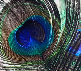 Peacock Feather - Obrázkek zdarma pro iPad