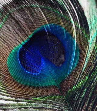 Peacock Feather - Obrázkek zdarma pro Nokia Asha 501
