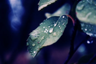 Drops On Leaf Wallpaper for Android, iPhone and iPad