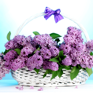 Baskets with lilac flowers - Obrázkek zdarma pro 208x208