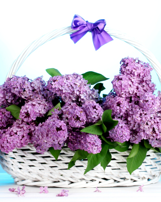 Baskets with lilac flowers - Obrázkek zdarma pro Nokia Asha 502