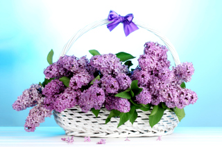 Baskets with lilac flowers - Obrázkek zdarma pro Widescreen Desktop PC 1920x1080 Full HD