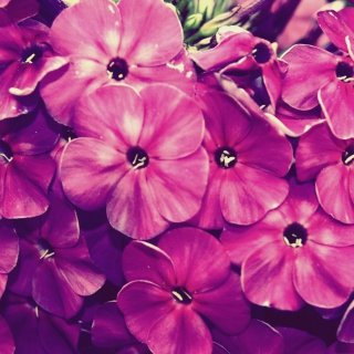 Flowers - Obrázkek zdarma pro 1024x1024