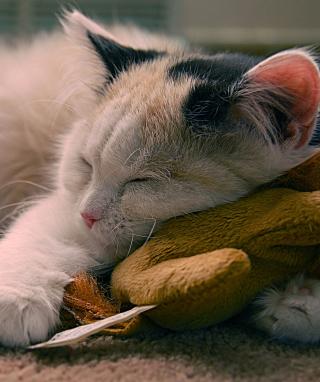 Sleeping Kitten - Obrázkek zdarma pro 640x1136