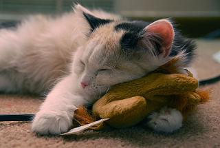 Sleeping Kitten - Obrázkek zdarma pro 1280x960