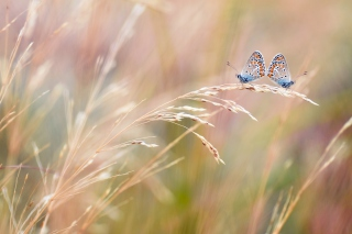 Transparent Blue Butterflies Wallpaper for Android, iPhone and iPad