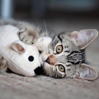 Adorable Kitten With Toy Mouse - Obrázkek zdarma pro 1024x1024
