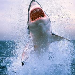 Shark Attack - Obrázkek zdarma pro 128x128