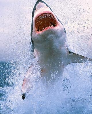 Shark Attack - Obrázkek zdarma pro iPhone 4S
