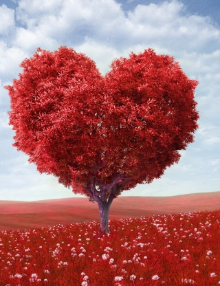 Heart Tree - Obrázkek zdarma pro 480x800