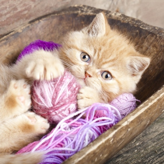 Cute Kitten Playing With A Ball Of Yarn - Obrázkek zdarma pro 2048x2048