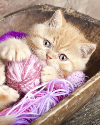Cute Kitten Playing With A Ball Of Yarn - Obrázkek zdarma pro 320x480