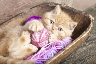 Cute Kitten Playing With A Ball Of Yarn - Obrázkek zdarma pro 1024x600