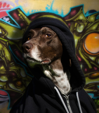 Portrait Of Dog On Graffiti Wall - Obrázkek zdarma pro iPhone 6 Plus