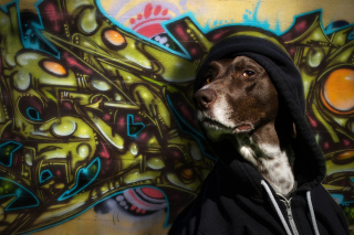 Portrait Of Dog On Graffiti Wall - Obrázkek zdarma pro Android 320x480