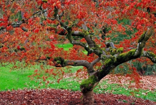 Red Leaves In Autumn Wallpaper for Android, iPhone and iPad