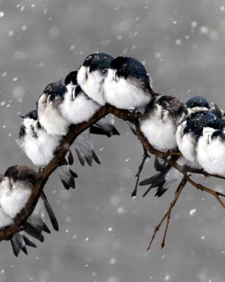Frozen Sparrows - Obrázkek zdarma pro Nokia Lumia 820