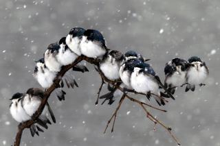 Frozen Sparrows - Obrázkek zdarma pro Fullscreen Desktop 1024x768