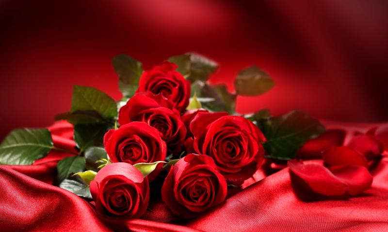http://files.vividscreen.info/soft/dd0c54bd39ac316718730c30196647c9/Roses-800x480.jpg
