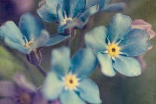 Картинка Blue Flowers для телефона