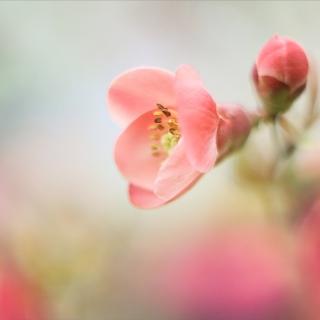 Pink Tender Flower - Obrázkek zdarma pro 1024x1024