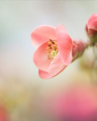 Pink Tender Flower - Obrázkek zdarma pro Nokia C6-01