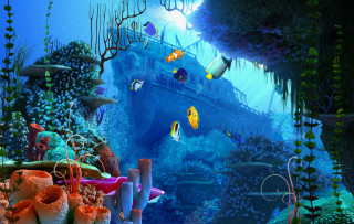Free Aquarium Coral Picture for Android, iPhone and iPad