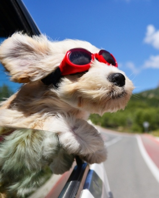 Dog in convertible car on vacation - Obrázkek zdarma pro 750x1334