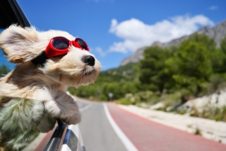 Dog in convertible car on vacation - Obrázkek zdarma pro 1366x768