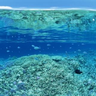 Underwater World - Obrázkek zdarma pro 208x208