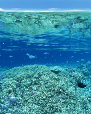 Underwater World - Obrázkek zdarma pro 750x1334