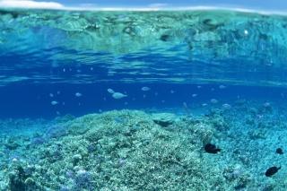 Underwater World - Obrázkek zdarma pro 480x360