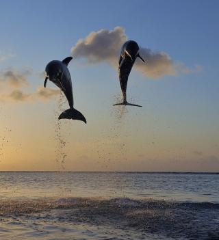 Dolphins Jumping - Obrázkek zdarma pro 128x128