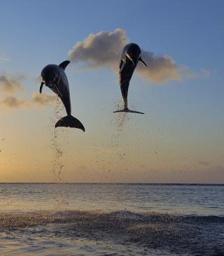 Dolphins Jumping - Obrázkek zdarma pro 360x640