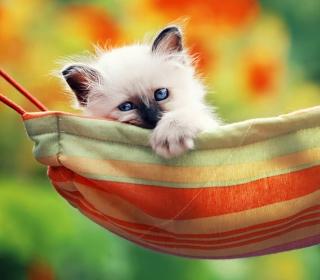 Super Cute Little Siamese Kitten - Obrázkek zdarma pro 208x208