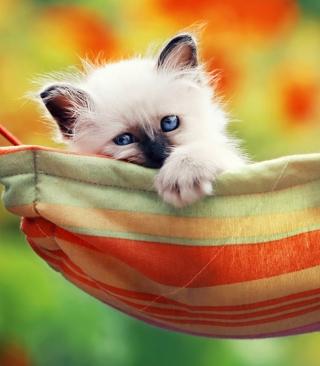 Super Cute Little Siamese Kitten - Obrázkek zdarma pro 240x320