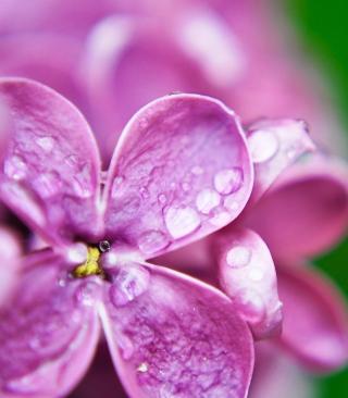 Dew Drops On Lilac Petals - Obrázkek zdarma pro Nokia X2