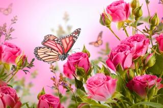 Rose Butterfly - Fondos de pantalla gratis para Samsung S5367 Galaxy Y TV