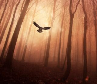 Dark Owl In Dark Forest - Obrázkek zdarma pro iPad